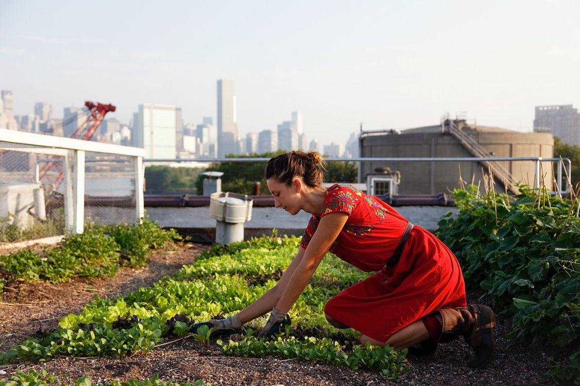 Вертикальная ферма дает возможность внутри города создать разветвленный аграрный комплекс.